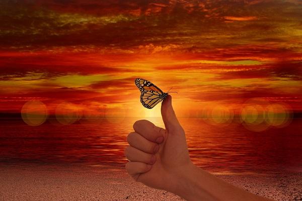 être heureux et être ok en psychologie positive