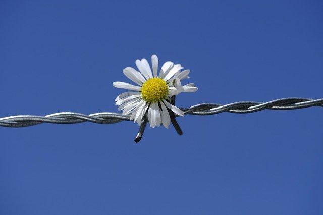 gestes barrières dans les familles pour éviter els conflits. 2 heures pour